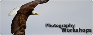 Valdez Alaska Photography Workshops