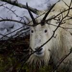 Valdez Alaska Tours